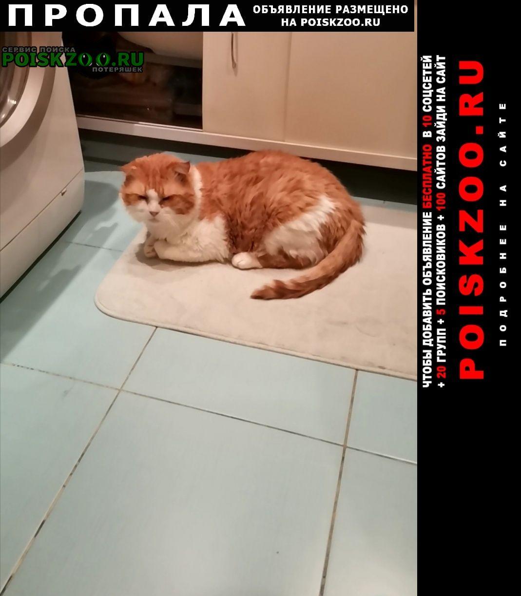 Санкт-Петербург Пропал кот 10 летний семьи