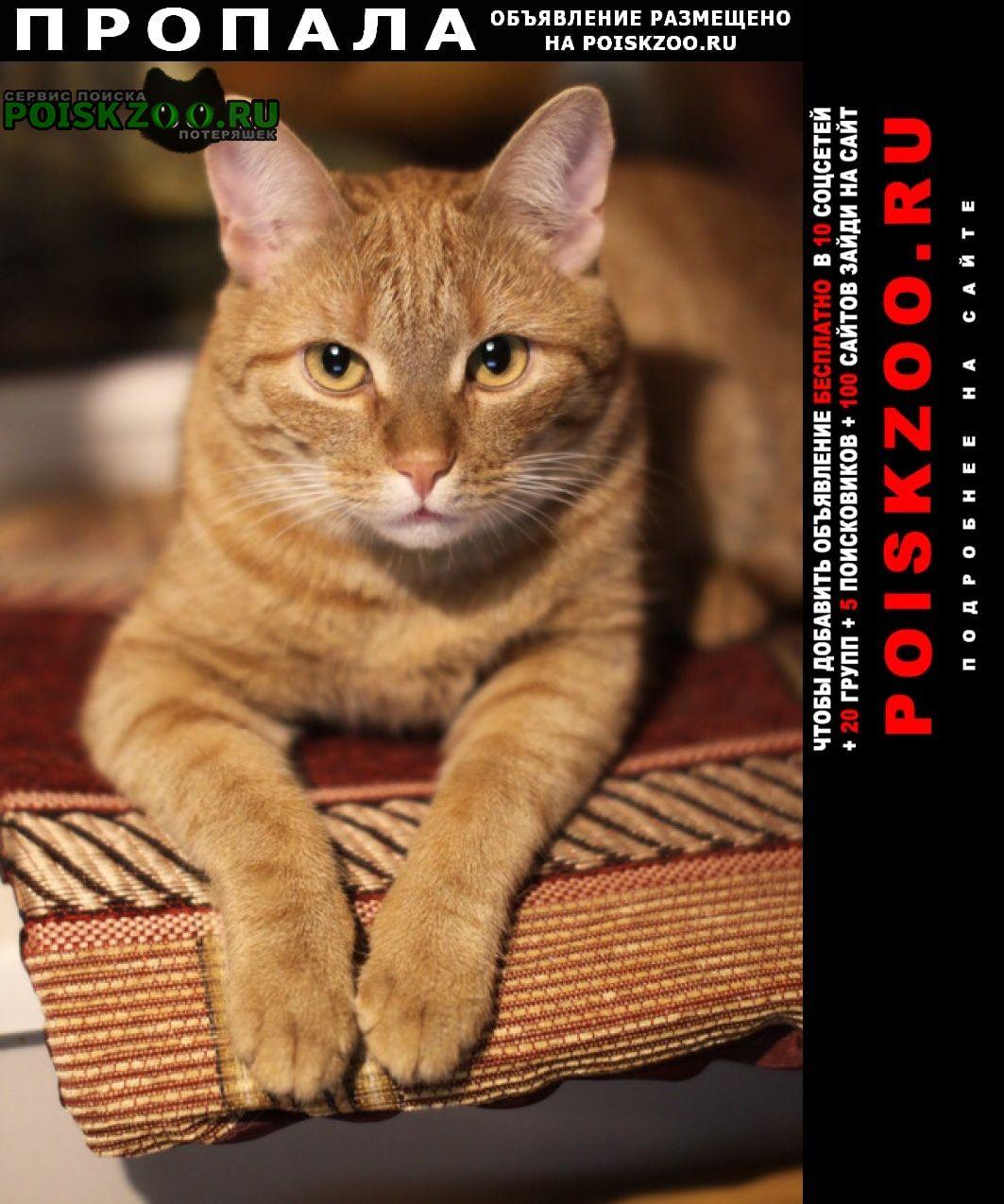 Электроугли Пропал кот рыжий