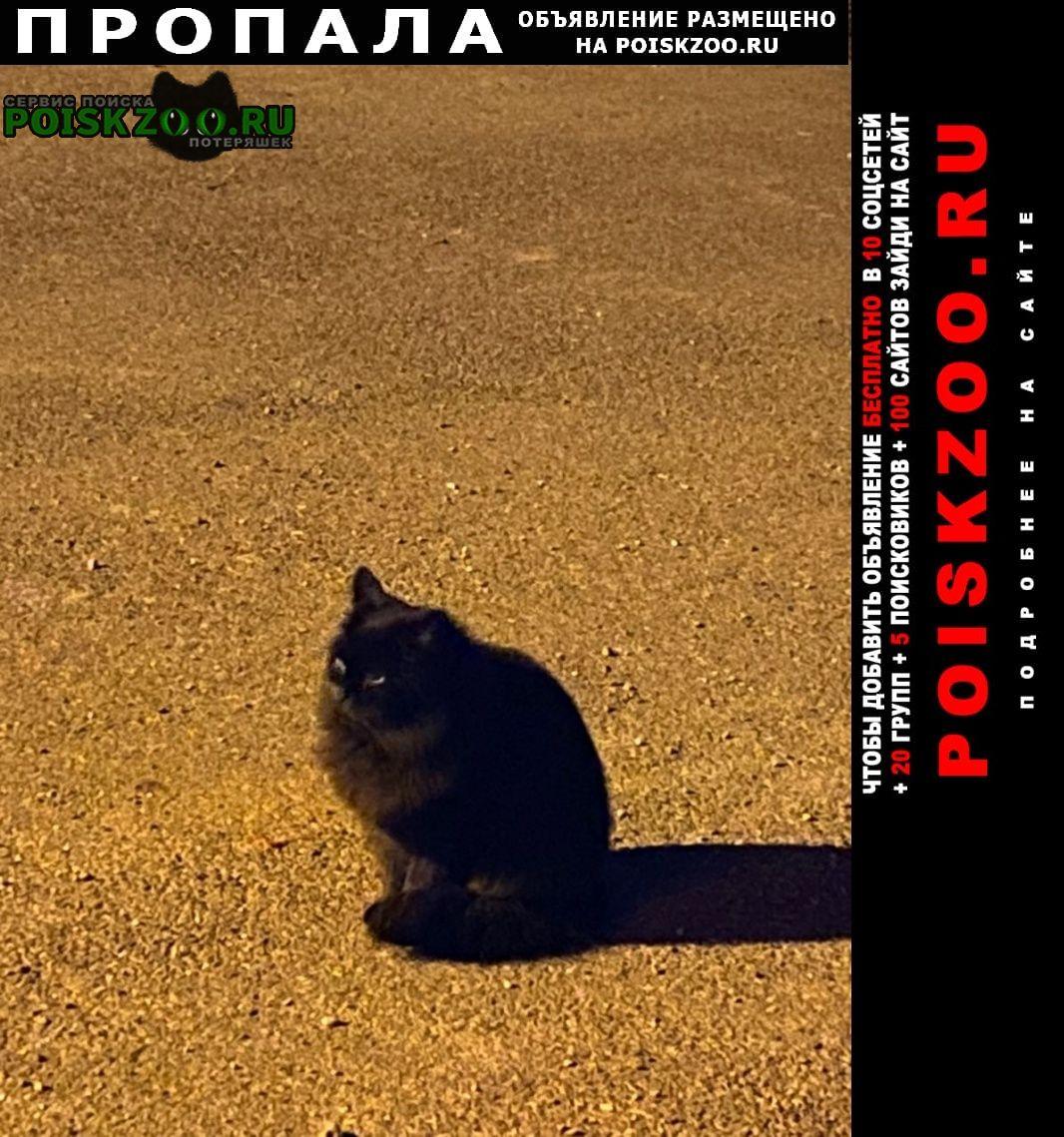 Пропала кошка Майкоп (Адыгея)