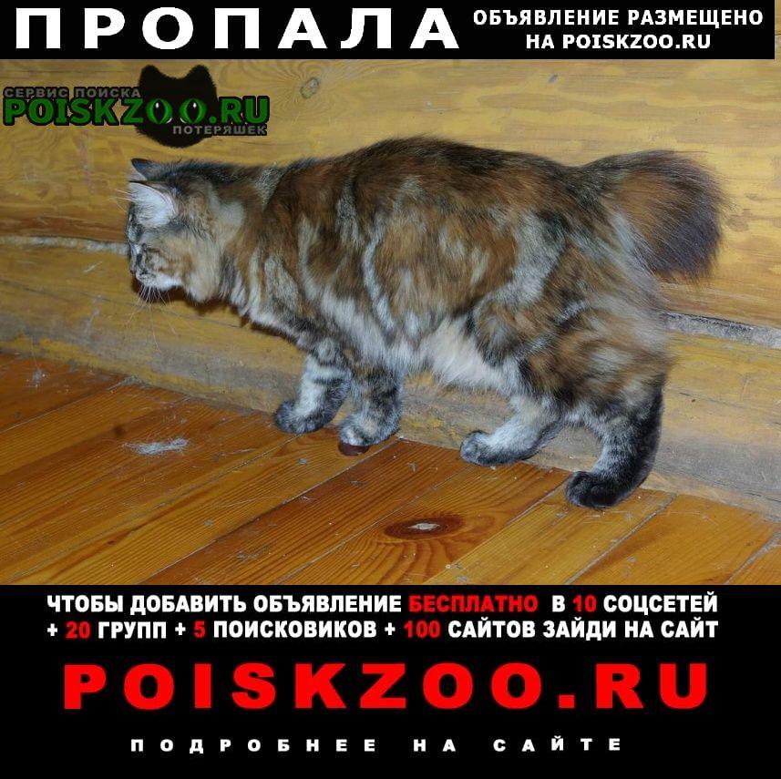 Пропала кошка с коротким хвостом Клин