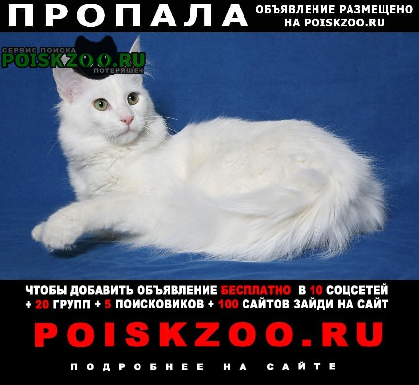 Азов Пропал кот вознаграждение 2000р.