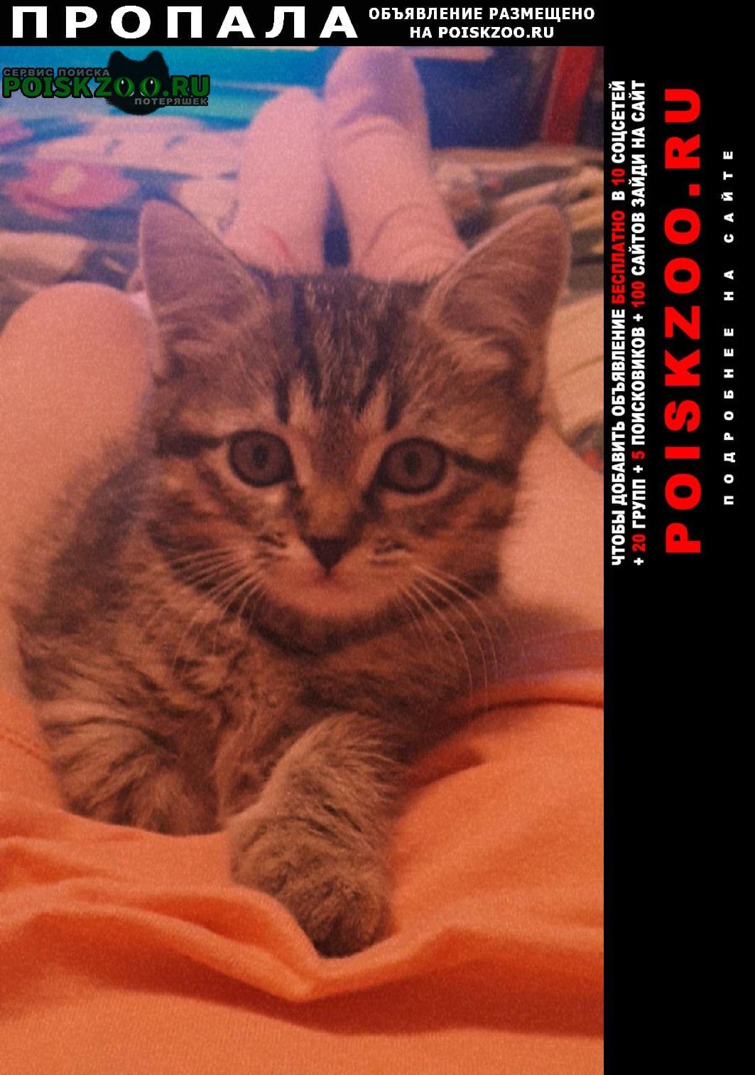 Вологда Пропала кошка котенок