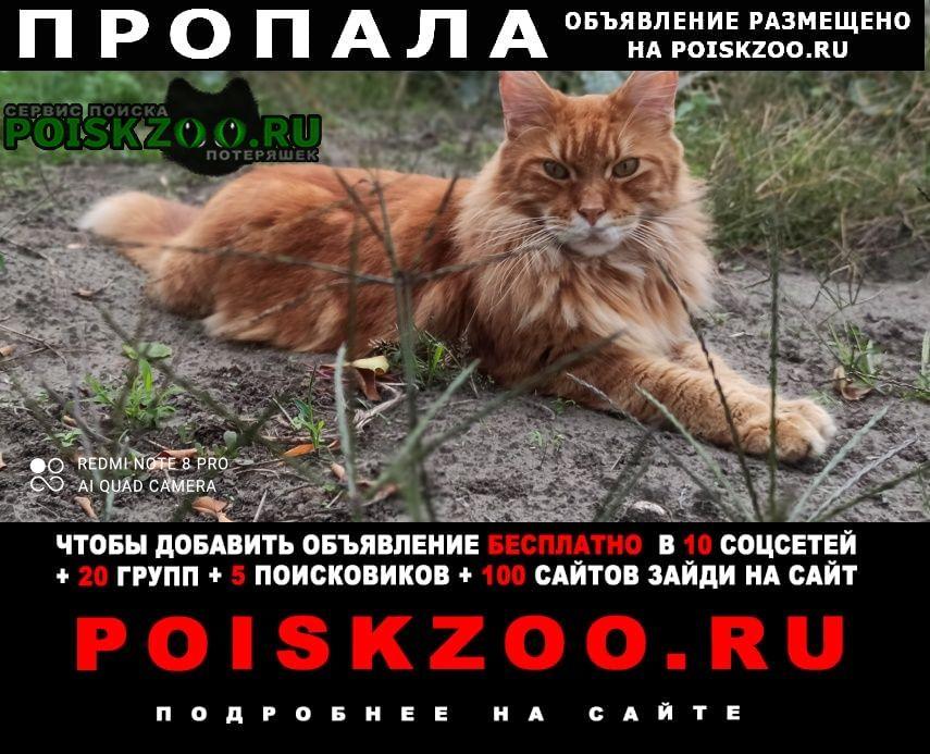 Черкассы Пропал кот очень срочно помогите пожалуйста