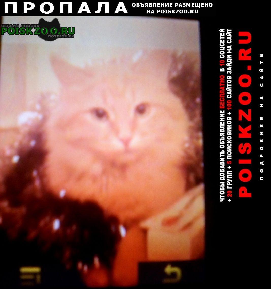 Клин Пропал кот