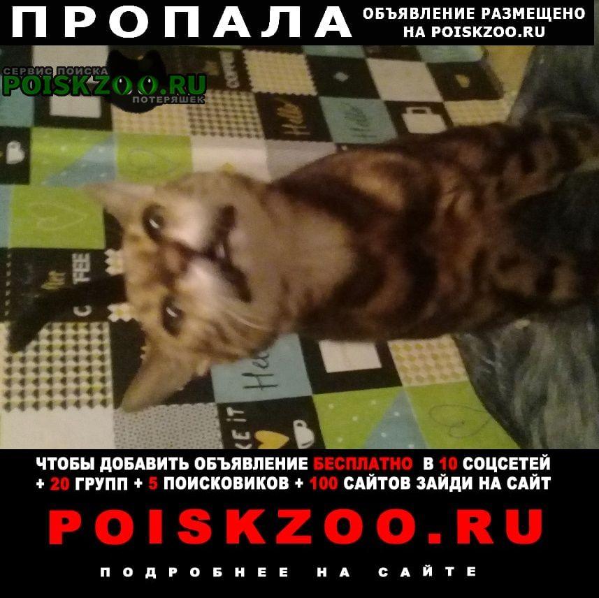 Тамбов Пропала кошка