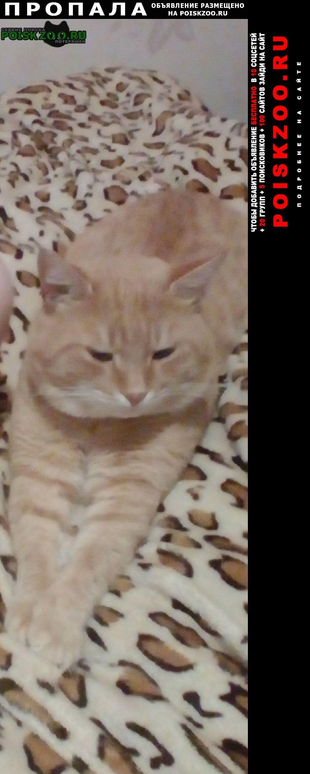 Черноморское Пропал кот