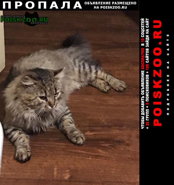 Подольск Пропал кот