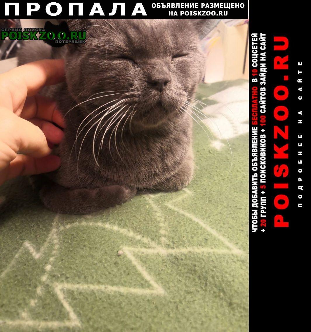 Пропал кот серый британский Уфа