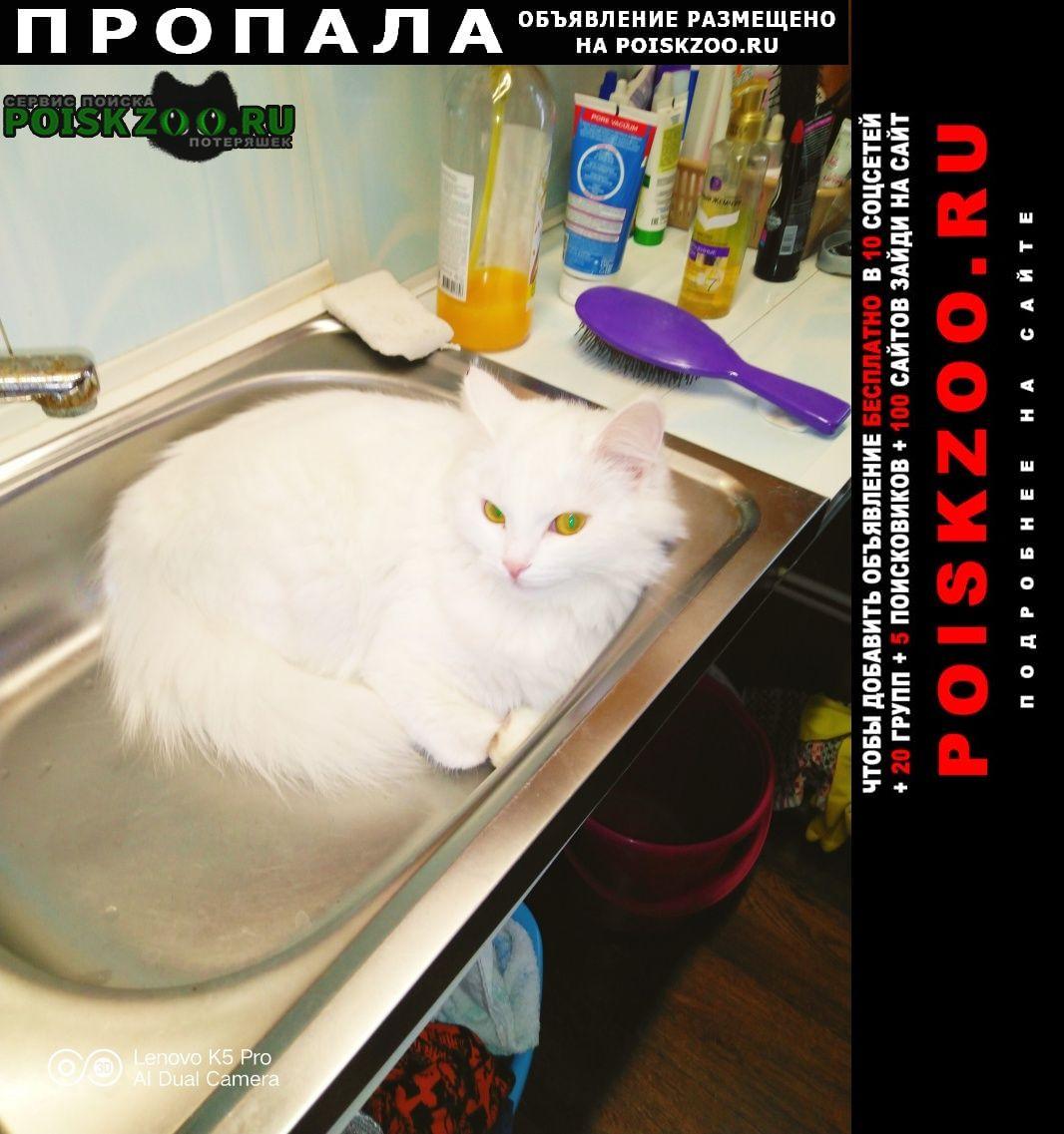 Екатеринбург Пропала кошка