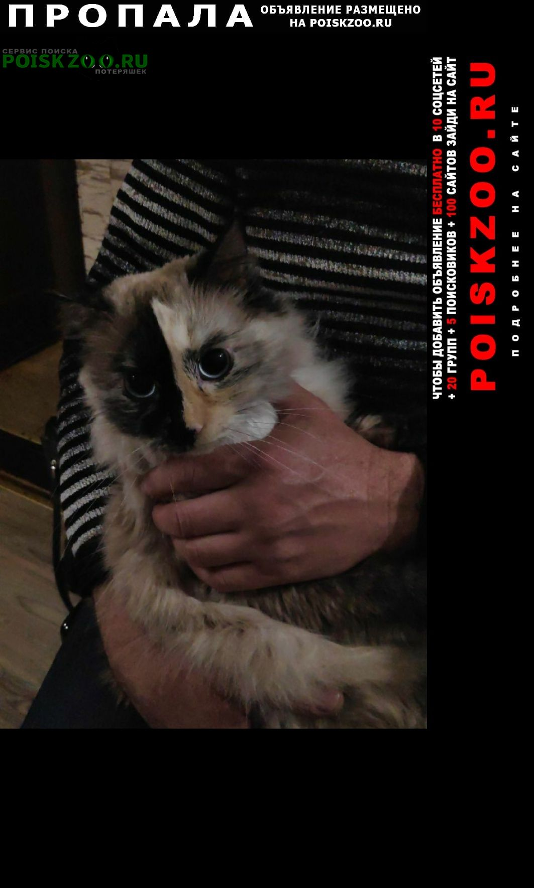 Пропала кошка отзывается на кличку габи Алушта