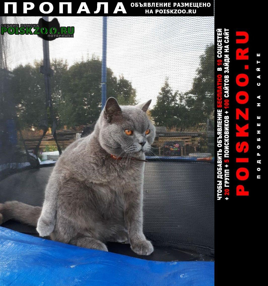 Санкт-Петербург Пропал кот метро международная