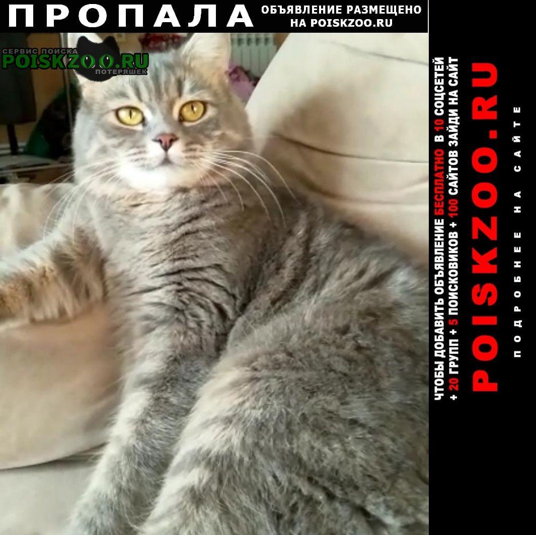 Черкесск Пропала кошка кошечка алиса