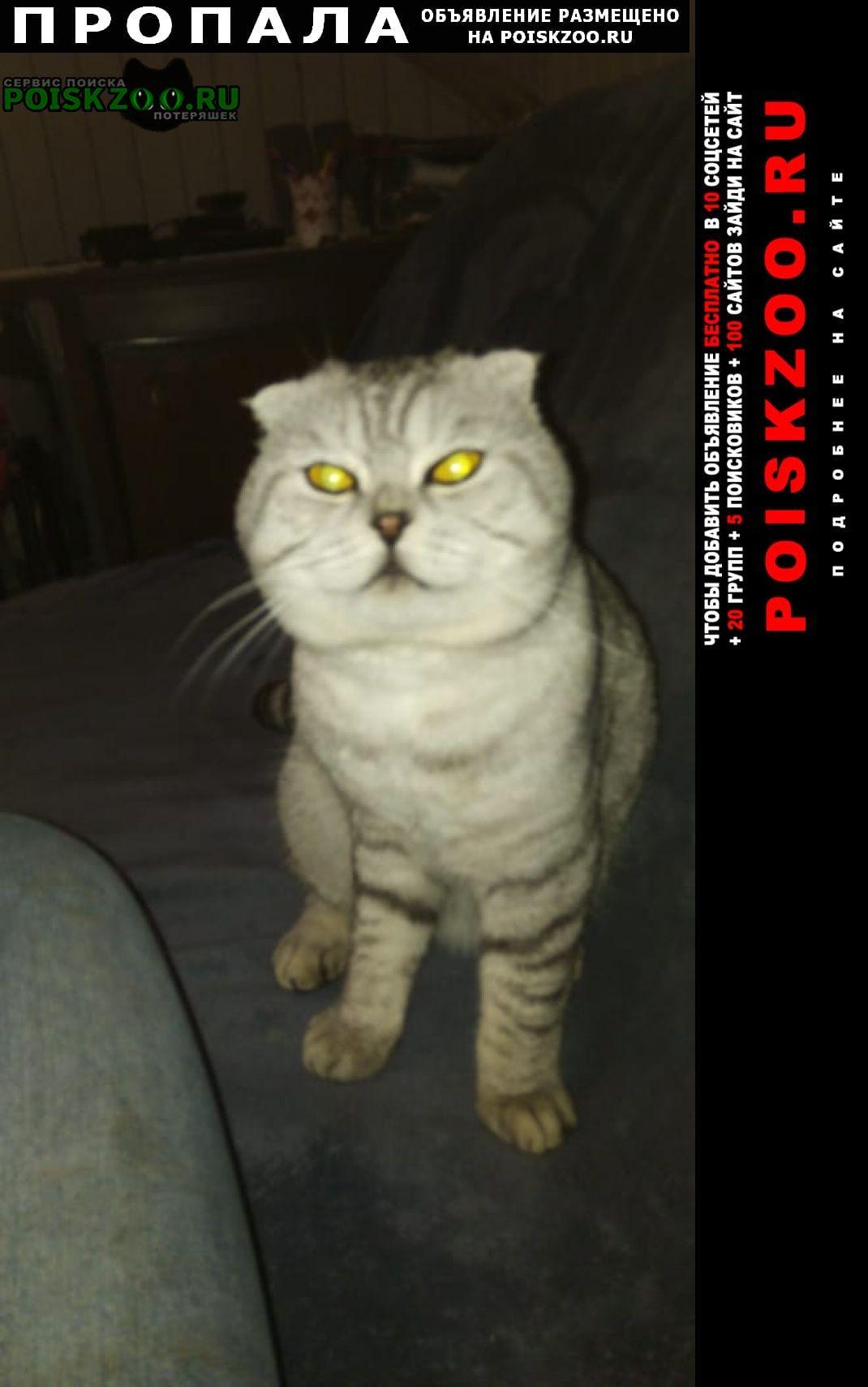 Истра Пропал кот истринский район, деревня духанино