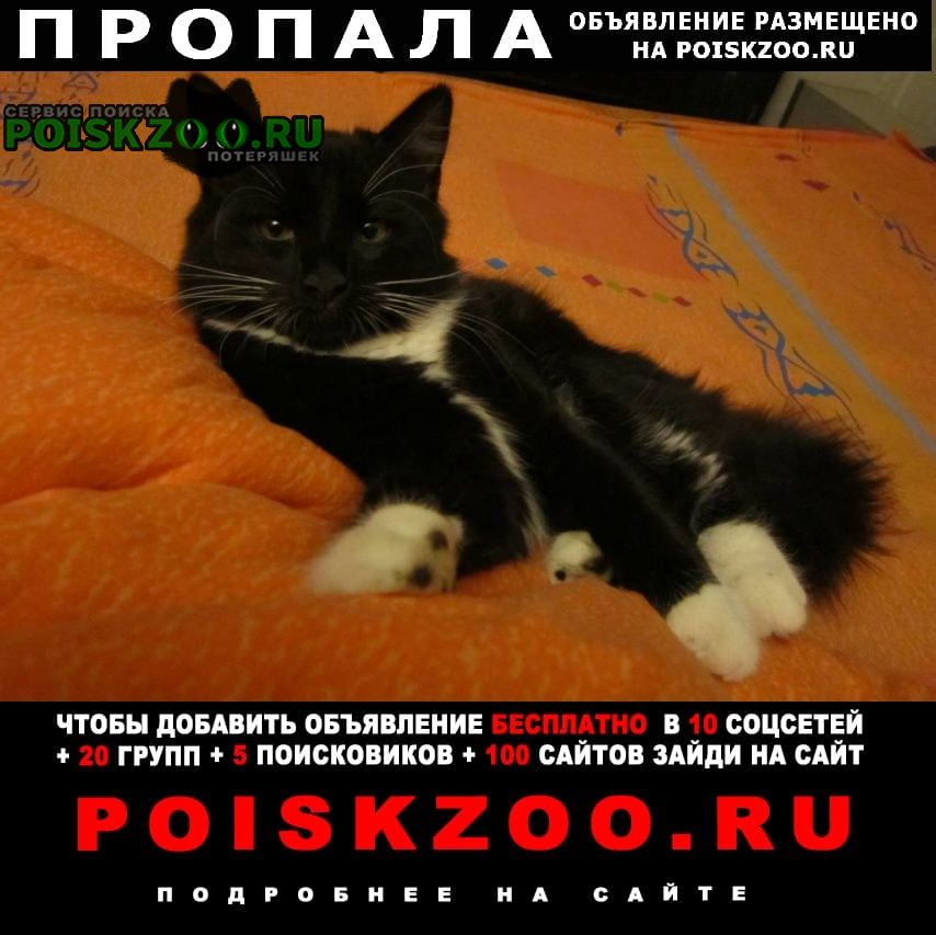 Пропал кот 4, 5 (на фото он моложе) Ростов-на-Дону