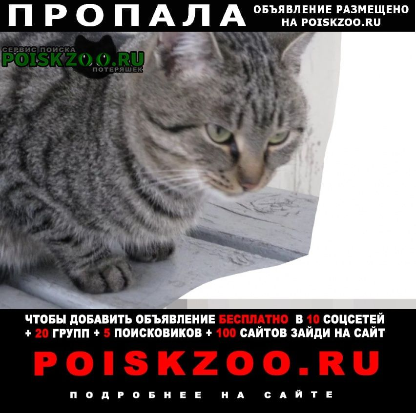 Абакан Хакасия Пропал кот марс