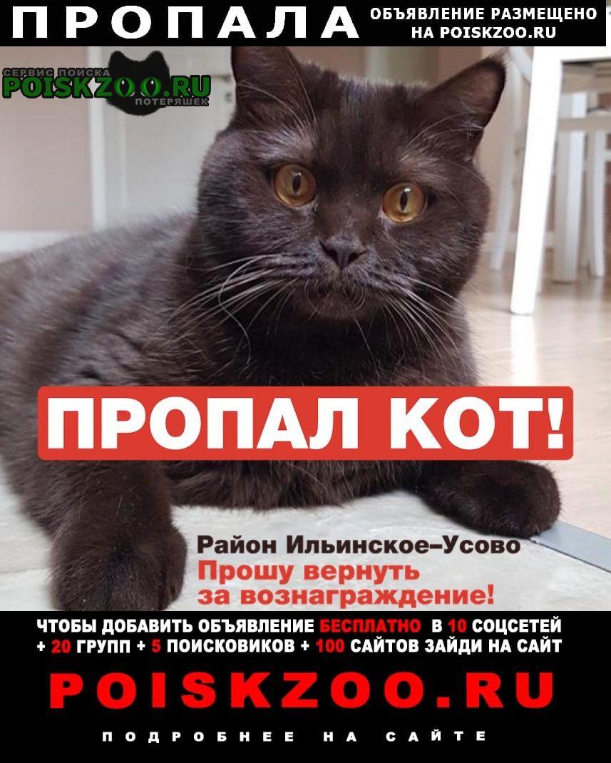 Пропал кот тёмно-коричневый Ильинский (Московская обл.)