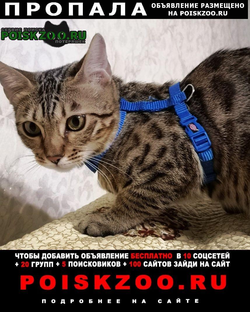 Москва Пропала кошка бенгал