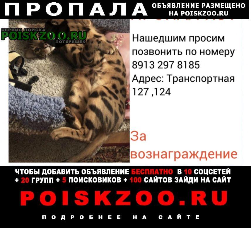 Новокузнецк Пропал кот тихон