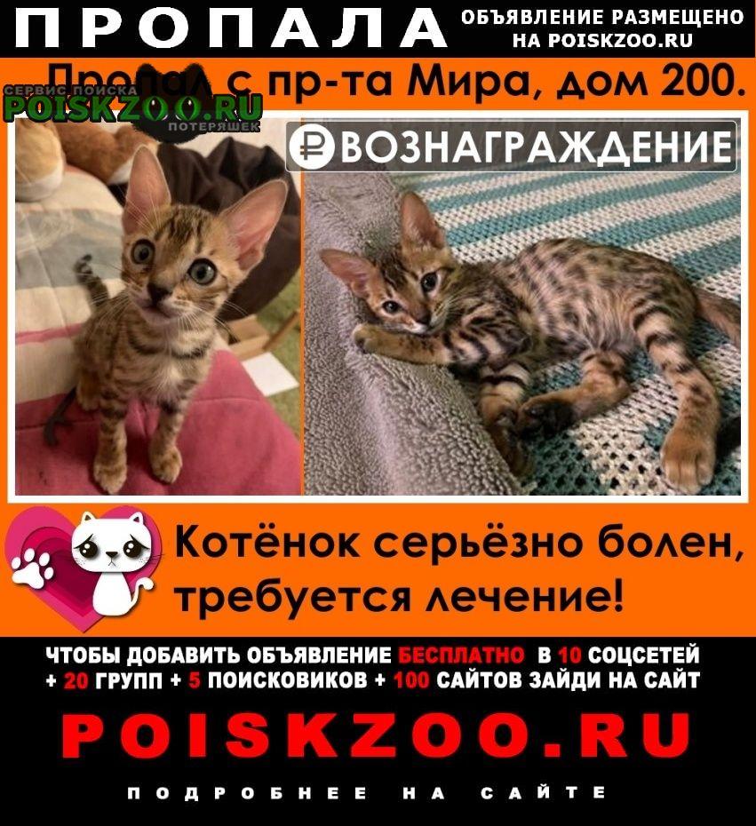 Пропал котёнок Москва