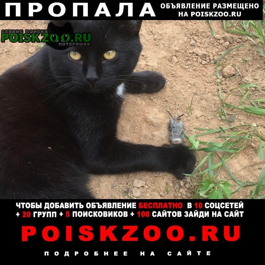 Пропал кот черный сидоровское Краснознаменск (Московская обл.)
