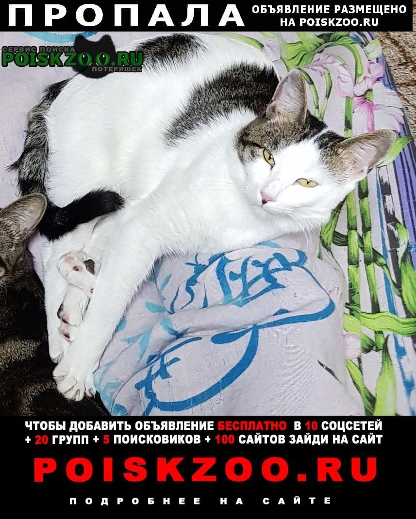 Пропал кот Благовещенск (Амурская обл.)