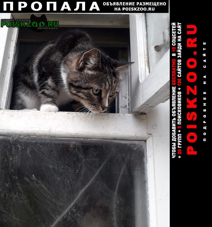 Пропал кот Кострома