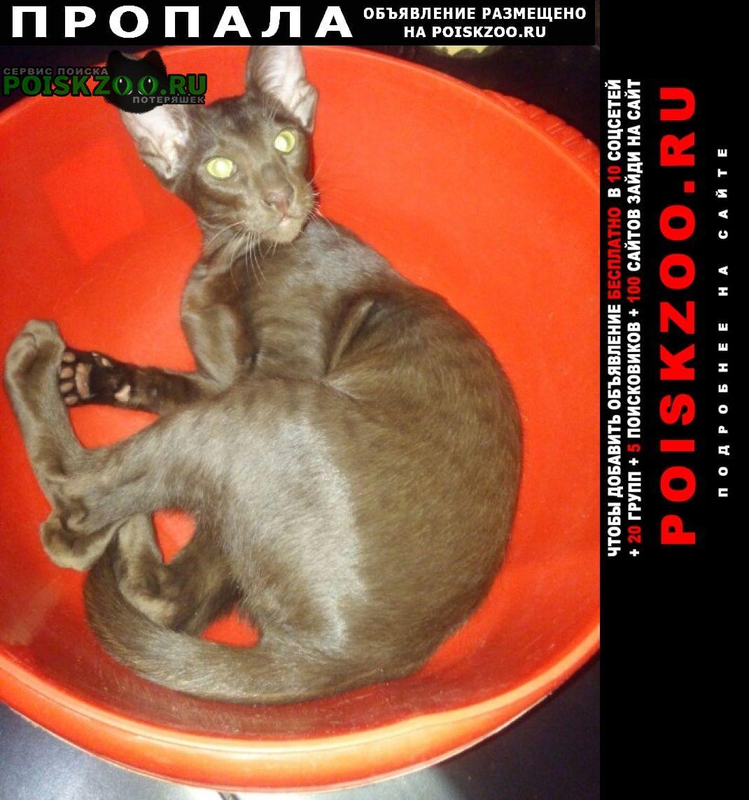 Конаково Пропал кот