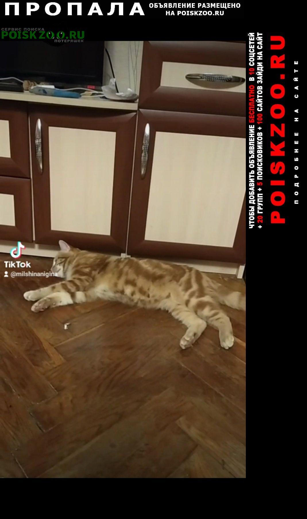 Петродворец Пропал кот