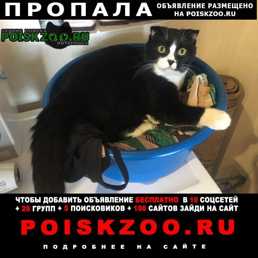Братск Пропал кот