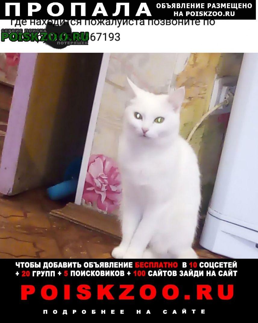 Пропала кошка пожалуйста помогите Братск