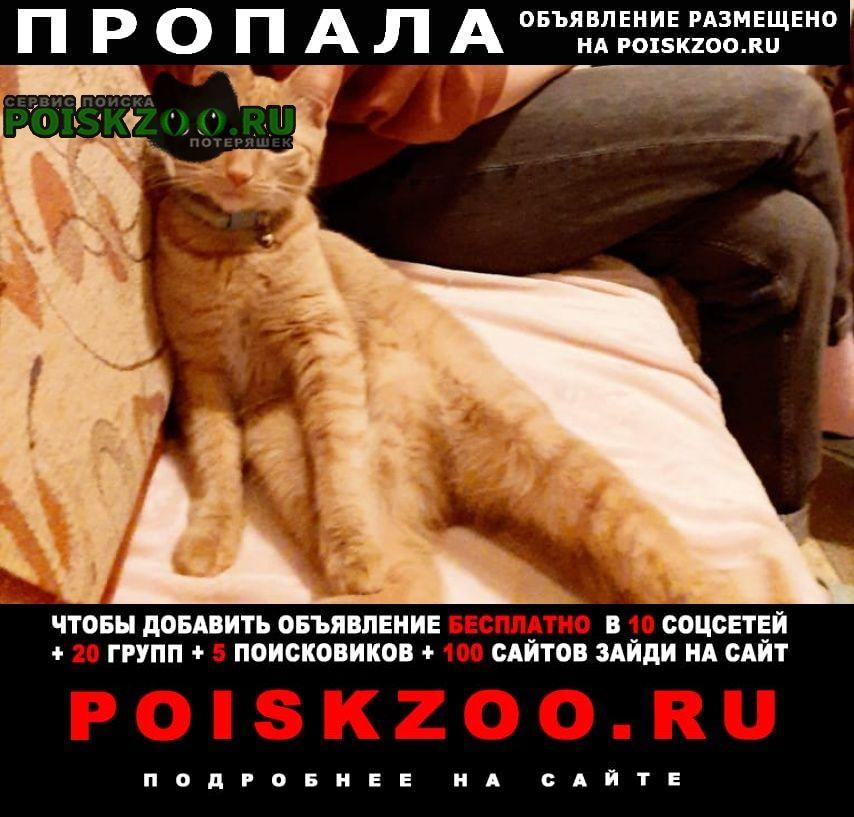 Московский Пропала кошка помогите найти