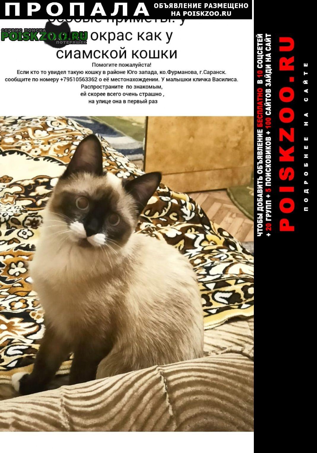 Пропала кошка Саранск