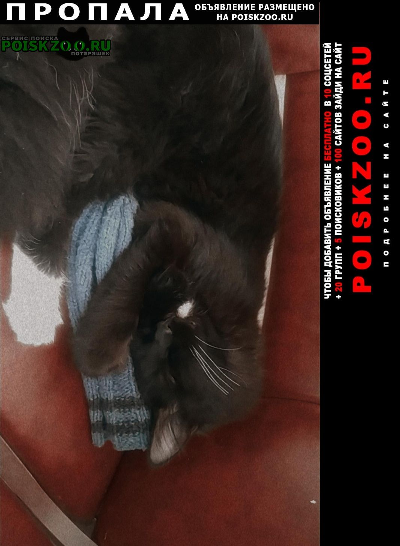 Шымкент (Чимкент) Пропал кот пожалуйста помогите найти моего а