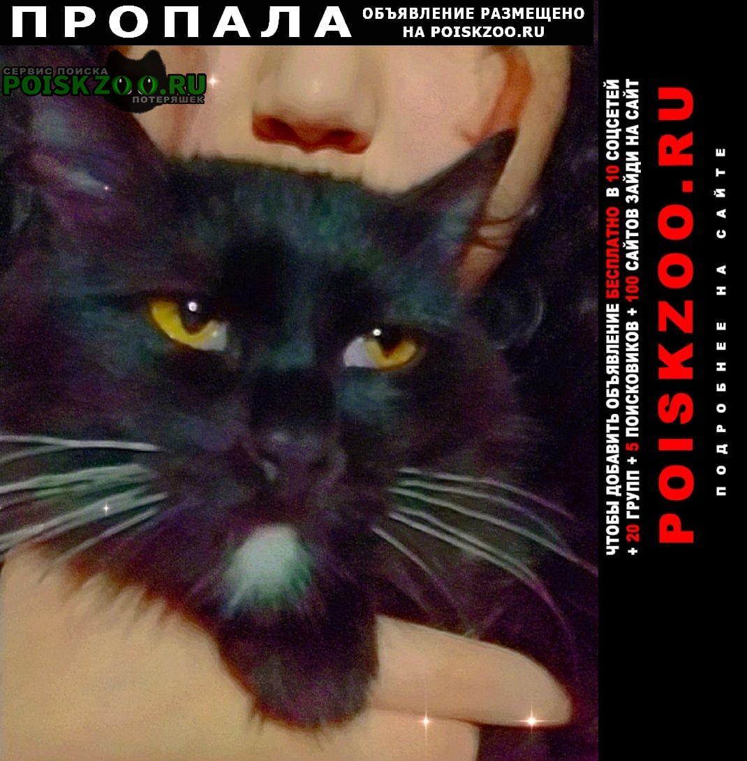 Пропал кот пожалуйста помогите найти Шымкент (Чимкент)