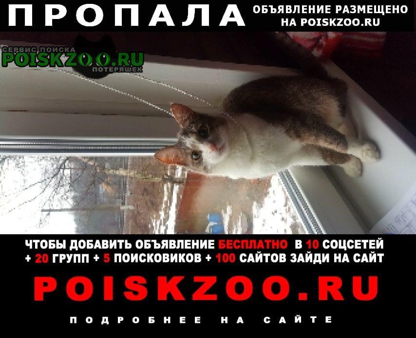 Пропал кот молодой Красногорск