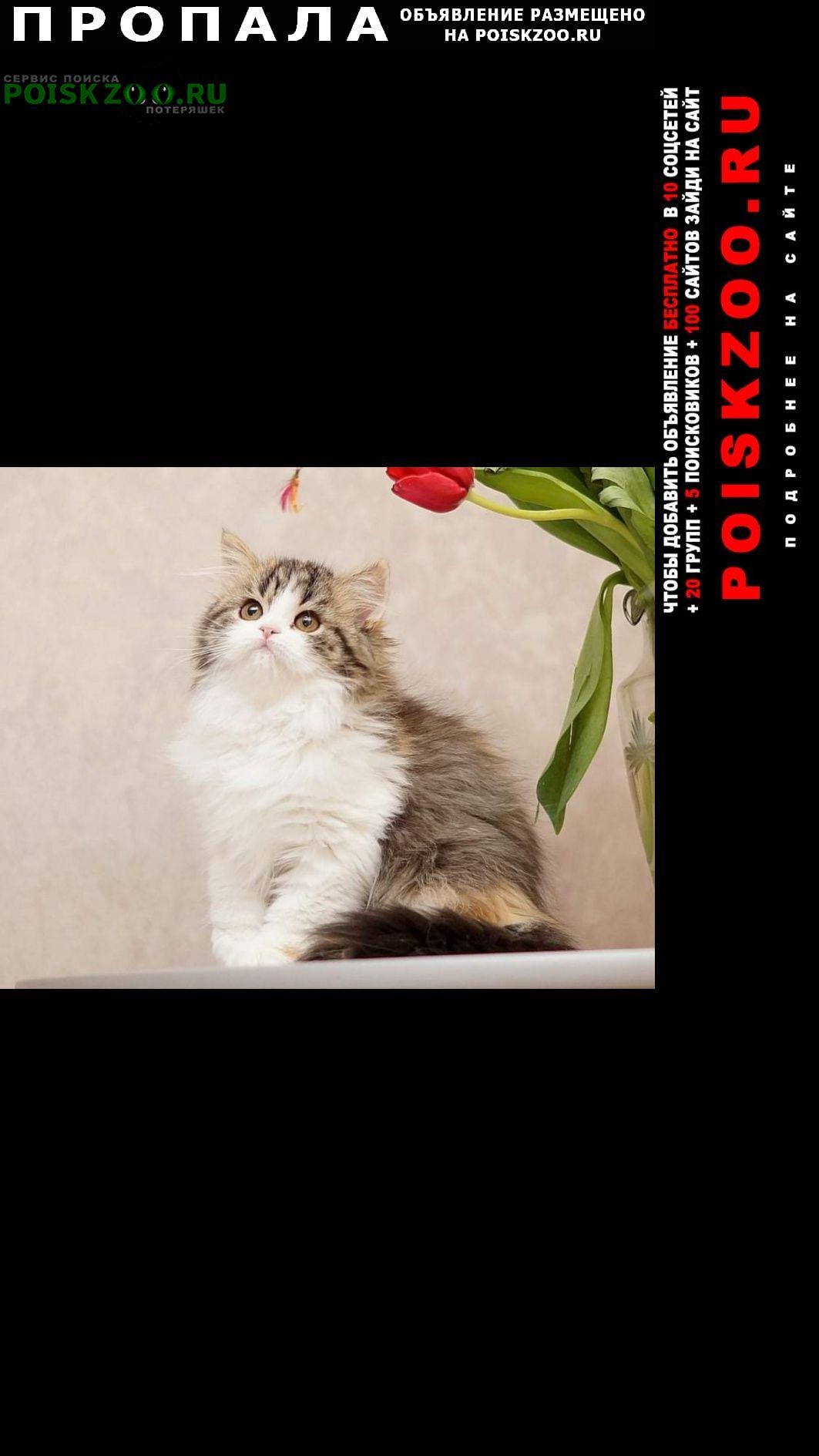 Пропала кошка возле посёлка химинститута д. 8 Тверь