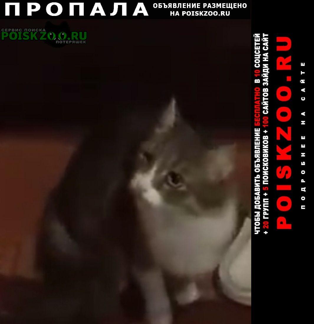 Пропала кошка по кличке масяня Белая Калитва
