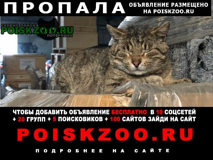 Пропала кошка кот буся нашедшему много $ Санкт-Петербург