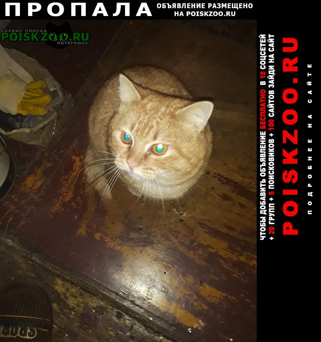 Пропал кот. кличка кузя Златоуст
