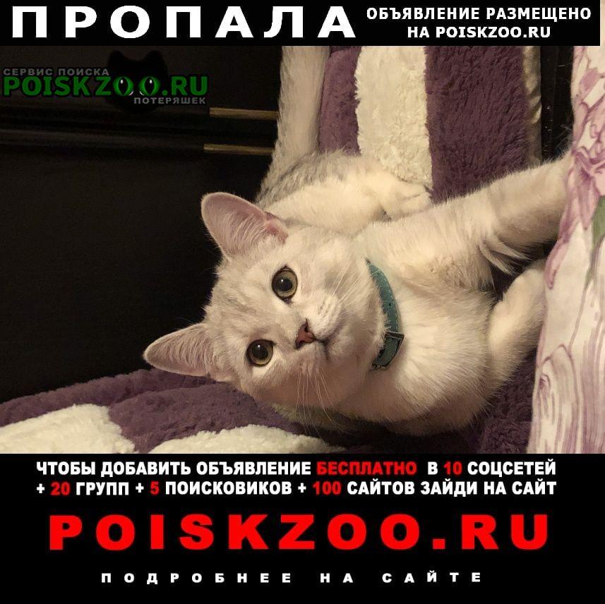 Пропал кот выпрыгнул в окно Москва