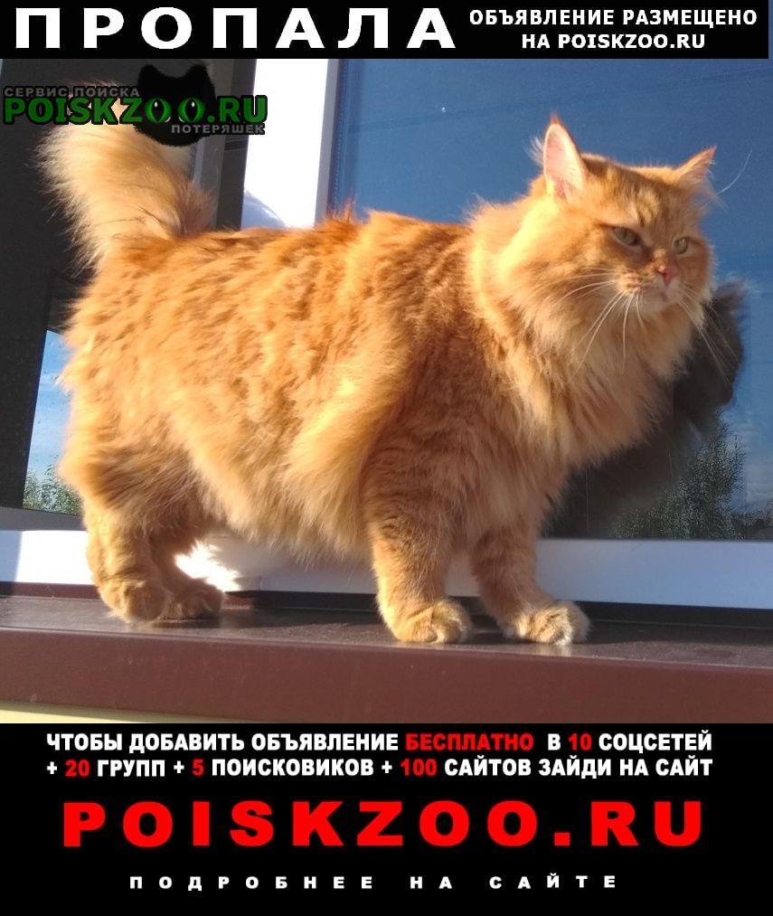 Нижневартовск Пропал кот.