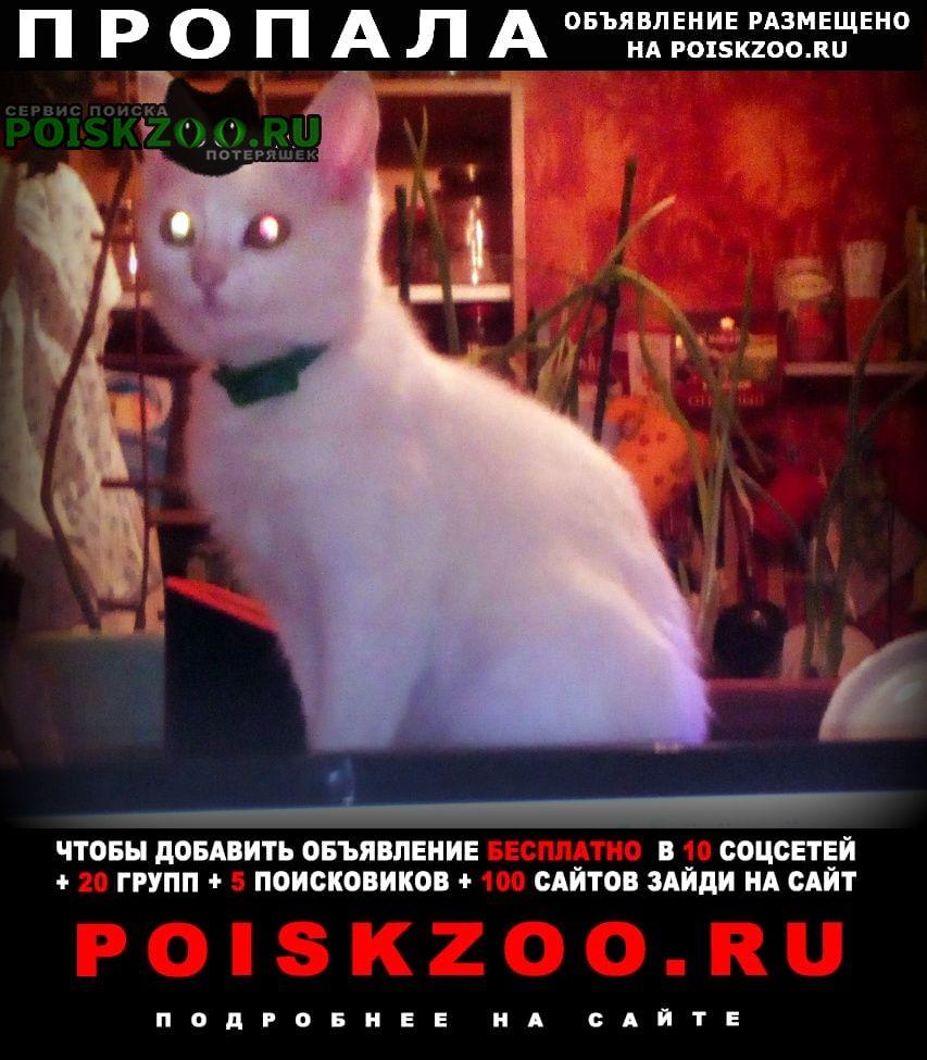 Пропала кошка белый котёнок 5 месяцев от роду Симферополь