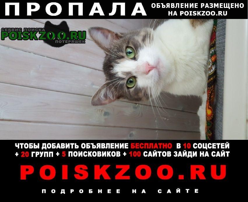 Красногорск Пропал кот молодой