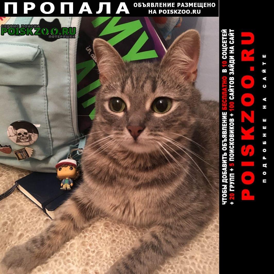 Пропал кот серый в гагаринском районе Москва