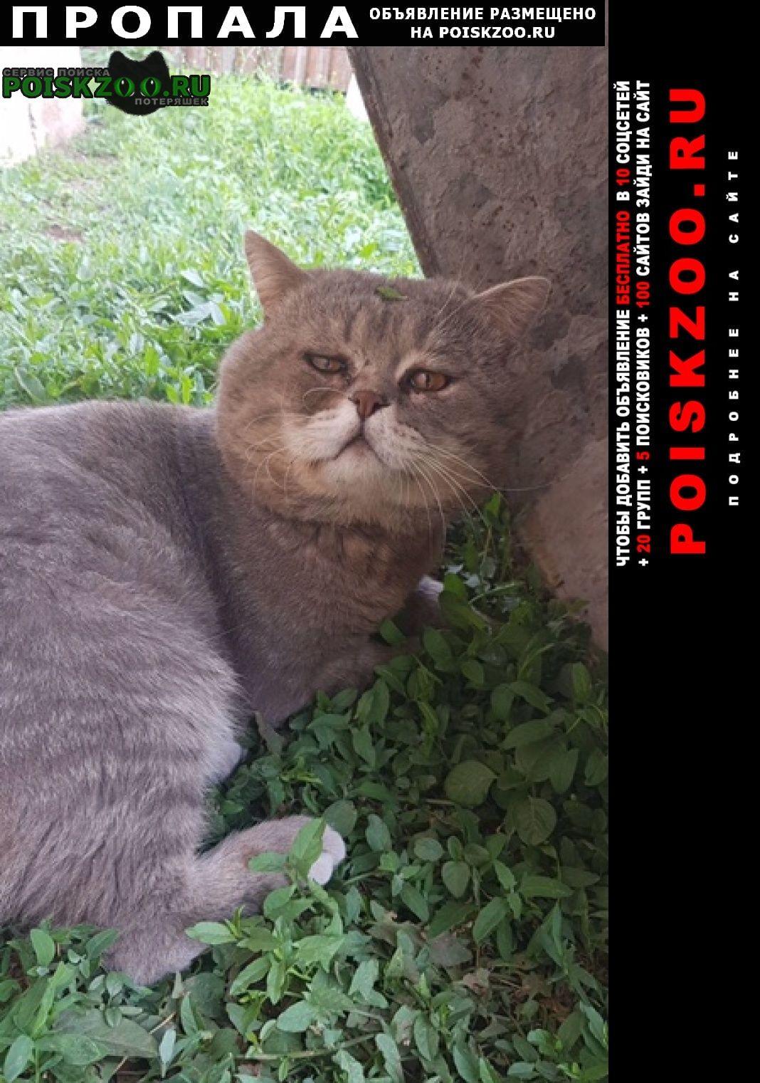 Пропала кошка кот на заре Энгельс