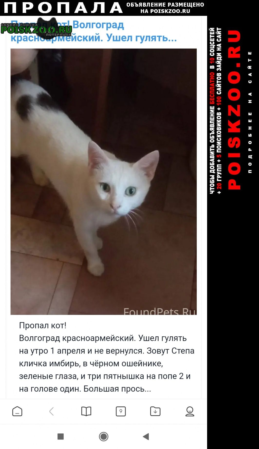 Пропал кот Волгоград