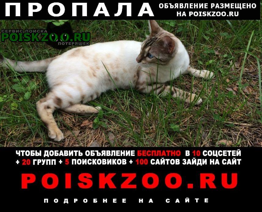 Пропала кошка бенгальский кот .. г Златоуст
