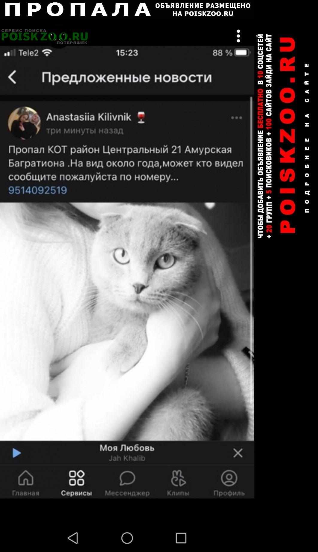 Пропала кошка срочно Омск