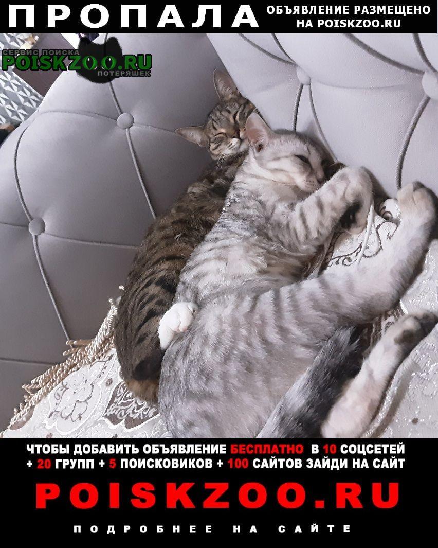 Пропала кошка белая из дома Алматы (Алма-Ата)
