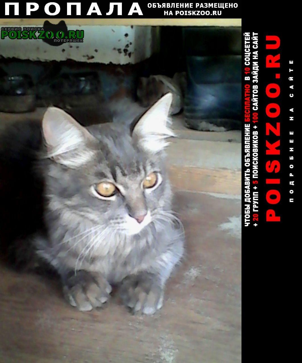 Пропал кот серого цвета Ярославль